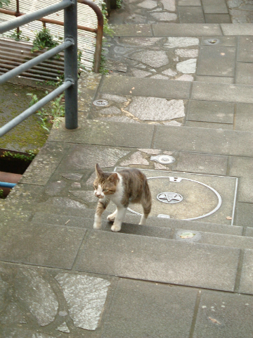 龍馬通りを上るネコ