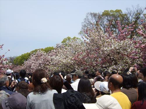 桜の通り抜けの混雑ぶり